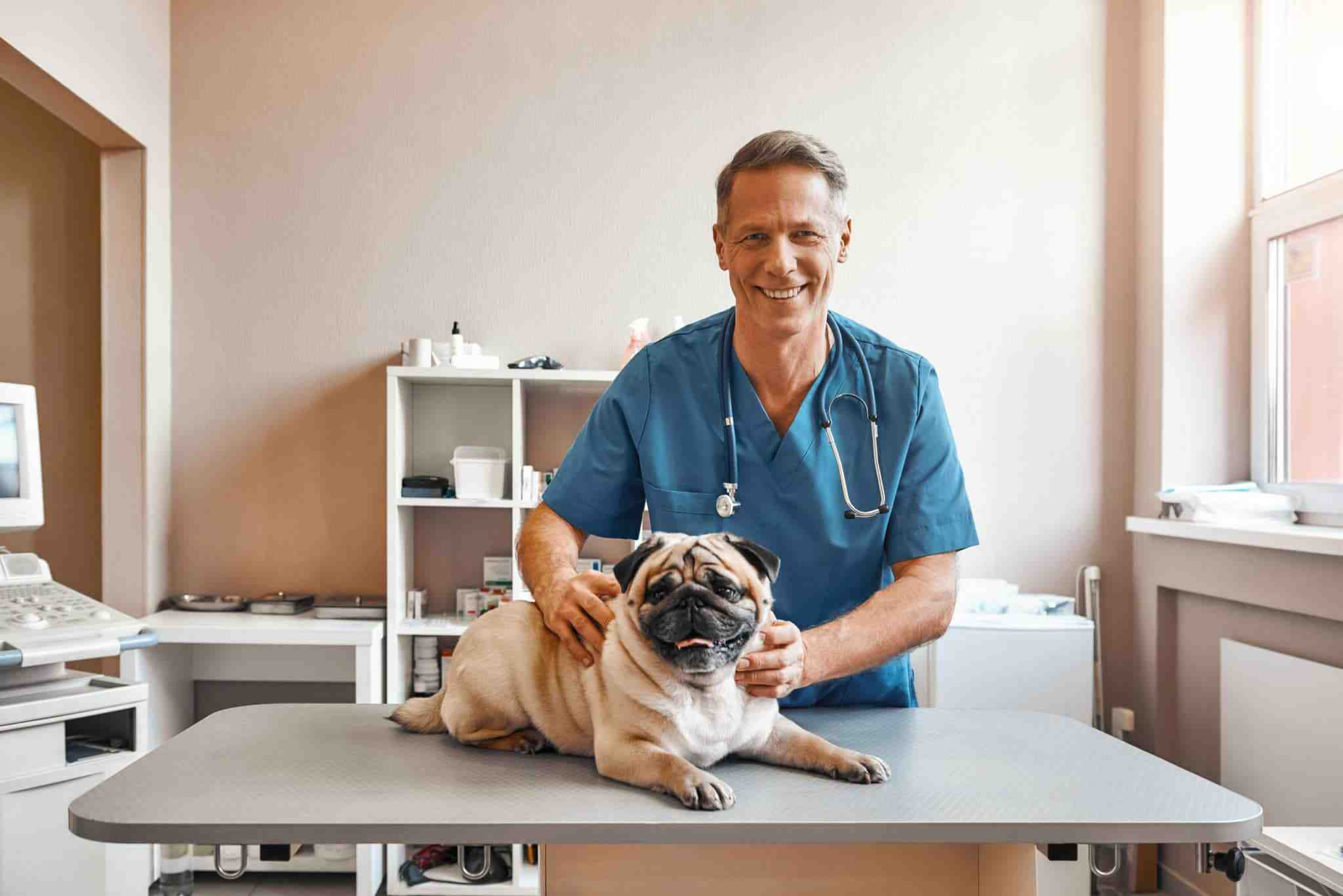 Comment être assistant vétérinaire ?